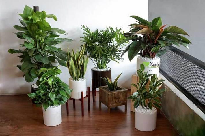این گیاه ها امواج مضر را از بین می برند