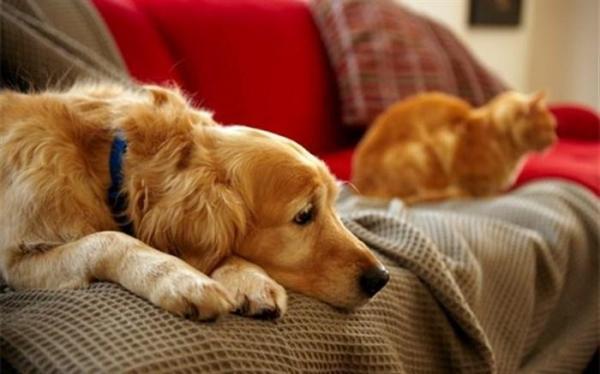 کلاهبرداری با ترفند فروش حیوانات خانگی